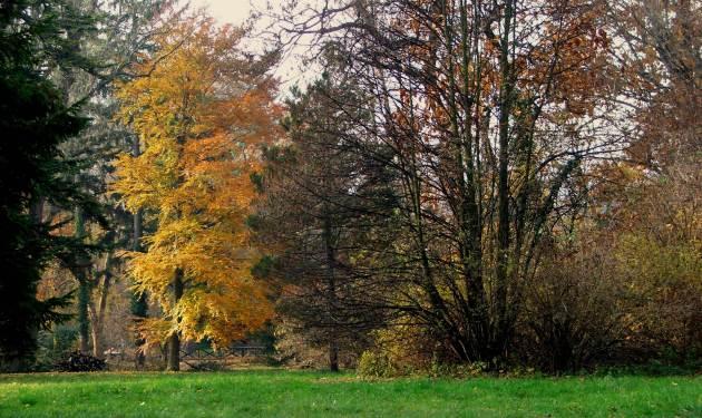 Arboretumbukk